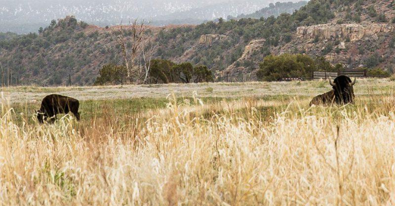Skyrider河牧場