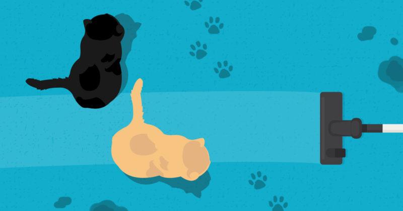 寵物污漬‧淨化妙法
