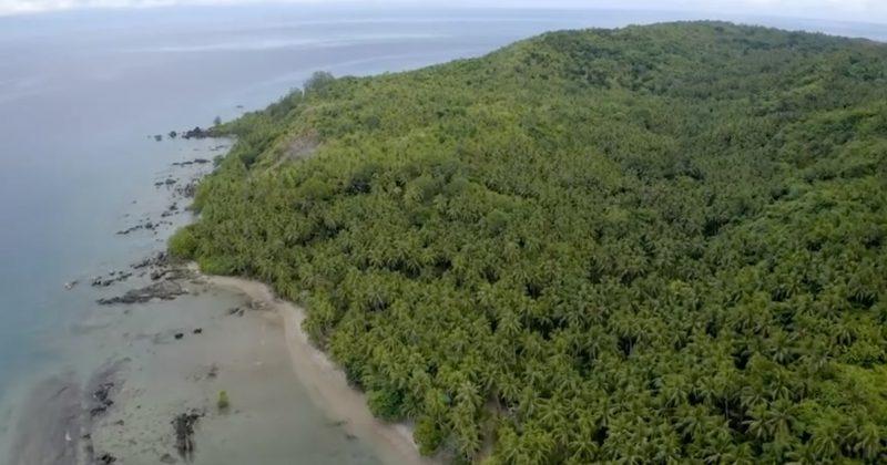 卡里派椰子農場