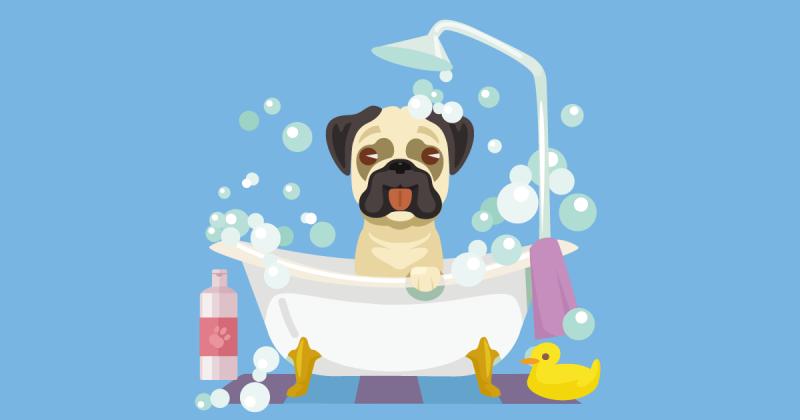 自製寵物乾洗粉