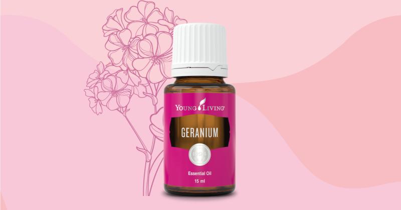 Geranium天竺葵精油指南